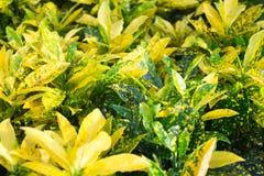 Belles feuilles de fleur Photos libres de droits