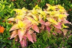 Belles feuilles de fleur Images libres de droits