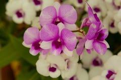 Belles feuilles de fleur et de vert d'orchidée sur le fond de tache floue Image stock