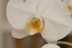 Belles feuilles de fleur et de vert d'orchidée sur le fond de tache floue Images stock