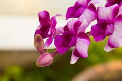 Belles feuilles de fleur et de vert d'orchidée sur le fond de tache floue Photos libres de droits