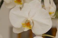 Belles feuilles de fleur et de vert d'orchidée sur le fond de tache floue Image libre de droits