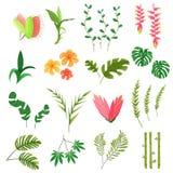 Belles feuilles et fleurs de jungle Photo libre de droits