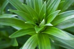 Belles feuilles fraîches lumineuses vertes dans le jardin images libres de droits