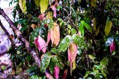 Belles feuilles multicolores Photos libres de droits