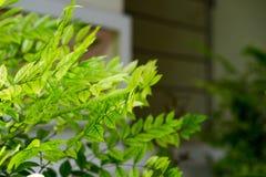 Belles feuilles qui affectent le soleil Et beau en nature T photo libre de droits