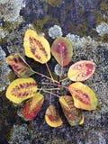 Belles feuilles sur le fond intéressant Photo libre de droits