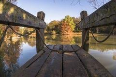 Belles feuilles sur le lac dans la forêt Photographie stock