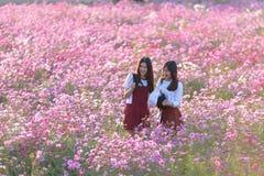 Belles filles dans le domaine de fleur de cosmos Image stock