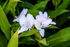 Belles fleurs à la lumière du soleil, le fond images stock