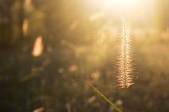 Belles fleurs à la lumière du soleil se reflétante de coucher du soleil dans la soirée Photographie stock libre de droits