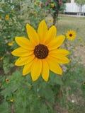 Belles fleurs Image libre de droits