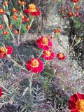 Belles fleurs photos stock