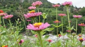 Belles fleurs Images libres de droits