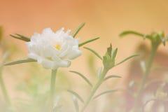 Belles fleurs Photos libres de droits