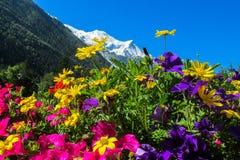 Belles fleurs au-dessous de la montagne couronnée de neige Images stock