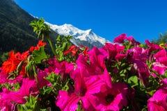 Belles fleurs au-dessous de la montagne couronnée de neige Photographie stock libre de droits