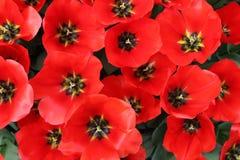 Belles fleurs au printemps Photos libres de droits