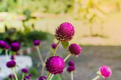 Belles fleurs avec le soleil lumineux Image stock