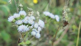 Belles fleurs blanches Photographie stock libre de droits