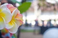 Belles fleurs blanches avec le plancher chiffonné photo stock