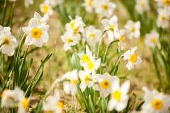 Belles fleurs blanches dans le domaine image libre de droits