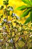 Belles fleurs blanches et vertes Image stock