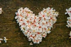 Belles fleurs blanches forme de coeur de ? de ? de flower? d'arbre de ?tung de ? d' photographie stock libre de droits