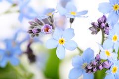 Belles fleurs bleues Photo libre de droits