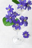 Belles fleurs bleues Image libre de droits