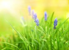 Belles fleurs bleues Photos stock
