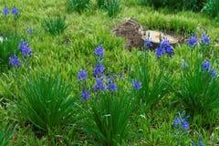 Belles fleurs bleues lumineuses en parc photos stock