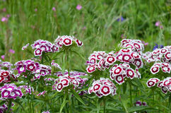 Belles fleurs chez San Francisco Botanical Gardens Photos stock