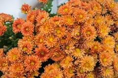 Belles fleurs comme fond image stock