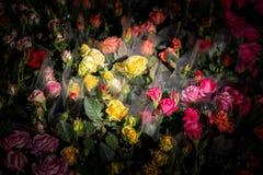 Belles fleurs comme fond photo stock