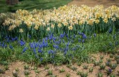 Belles fleurs comme fond photographie stock