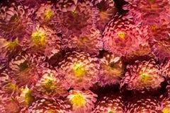 Belles fleurs comme fond images libres de droits