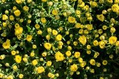 Belles fleurs comme fond photos stock