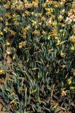 Belles fleurs comme fond images stock