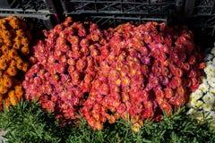 Belles fleurs comme fond photos libres de droits
