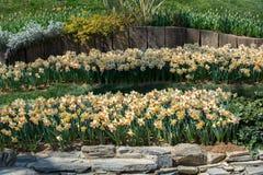 Belles fleurs comme fond photographie stock libre de droits