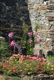 Belles fleurs comme fond photo libre de droits