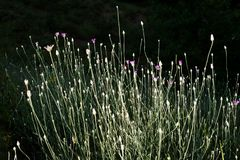 Belles fleurs comme fond image libre de droits