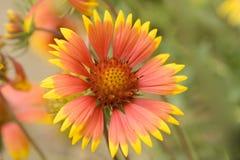Belles fleurs couvrantes Photos stock