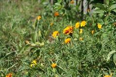 Belles fleurs d'été Image libre de droits