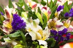 Belles fleurs d'Alstroemeria et x28 ; Lis péruvien ou lis de l'inc. Photographie stock