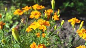 Belles fleurs d'automne Images stock