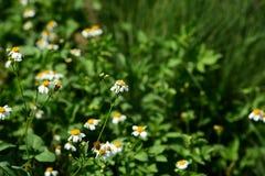 Belles fleurs d'herbe Photos libres de droits