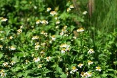 Belles fleurs d'herbe en soleil lumineux Utilisation comme fond d'image Photo libre de droits