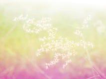 Belles fleurs d'herbe faites avec les filtres colorés Photos stock